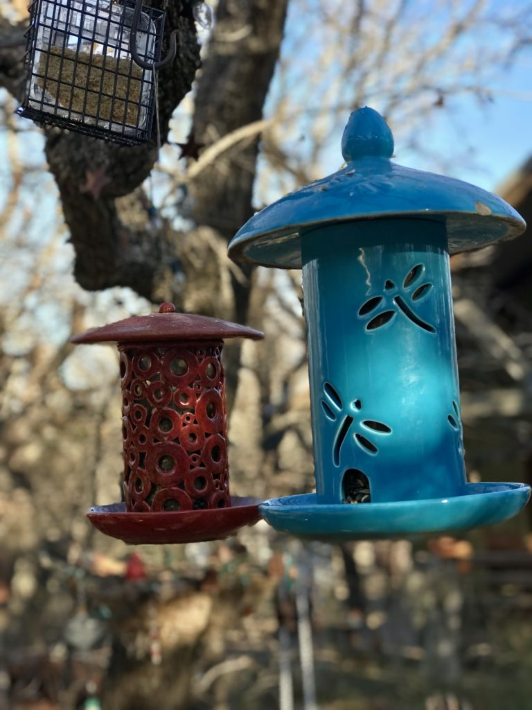 birds, feeding, winter blues