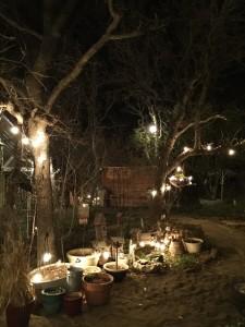 yard, fairies, plants