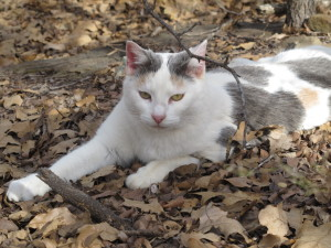 hiking in Texas, Star kitty hiking guide