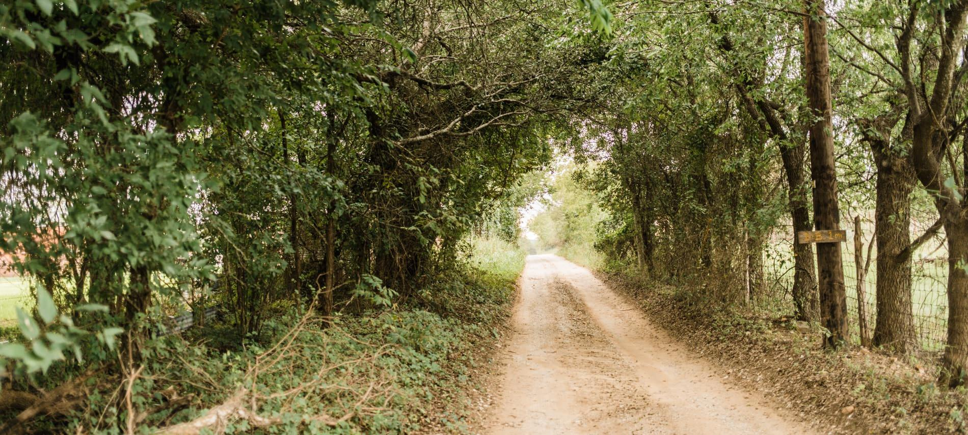 Dirt road surrounded by green leafy plants and trees